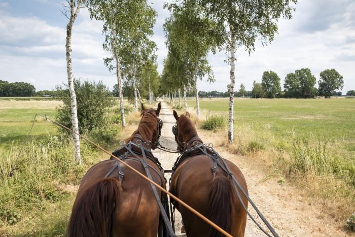 Er op uit met de paarden